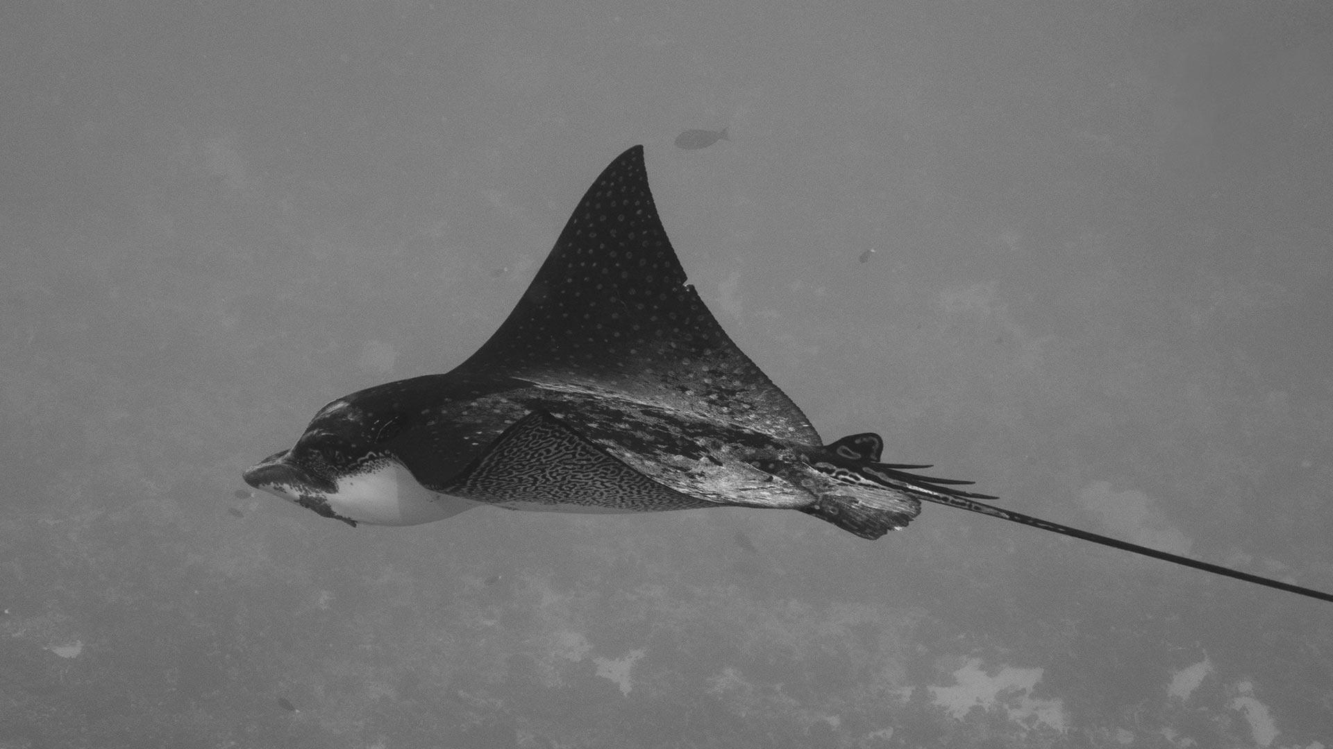 poisson en mer service de rencontres Intros pour les sites de rencontres
