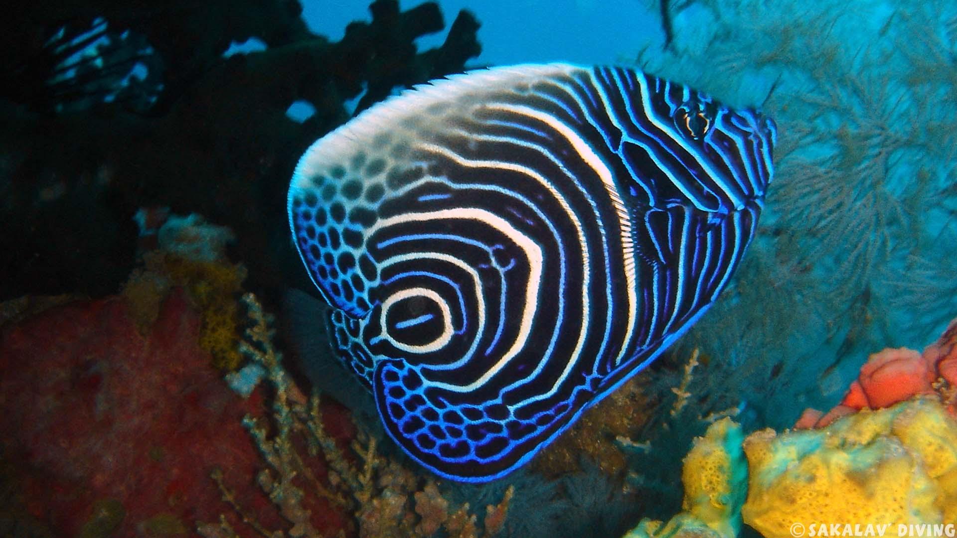 Séjour Plongée à Nosy Be Spécial Biologie Sous Marine Avec